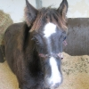 ISPCA rescue foal with severely embedded head collar