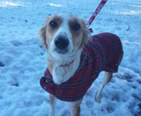 ISPCA pet care tips during cold weather