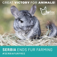 ISPCA calls for immediate fur farming ban in Ireland after Serbia ban and Veterinary Ireland report